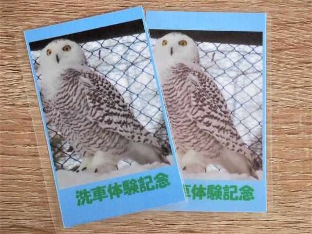 洗車体験記念にもらったカード。フクロウの写真と説明が書かれている